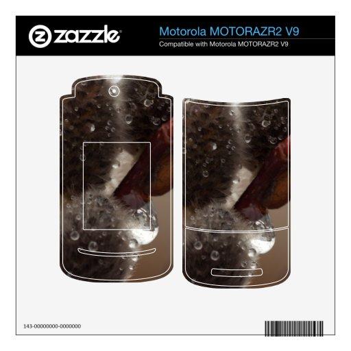 Trío del Catkin del CTR MOTORAZR2 V9 Skin