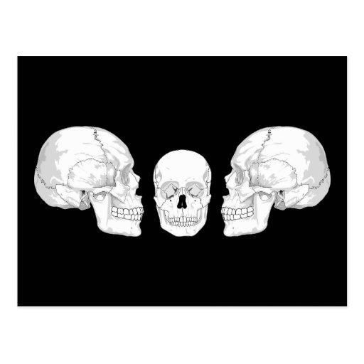 Trío del cráneo tarjetas postales