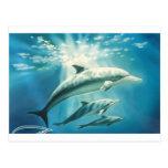 Trío del delfín postales