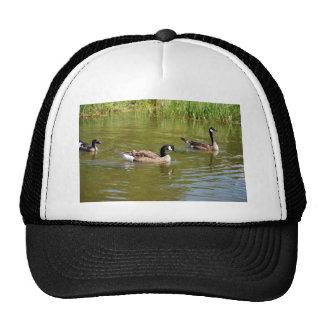 Trío del ganso de Canadá en el lago goose, Anchora Gorro De Camionero