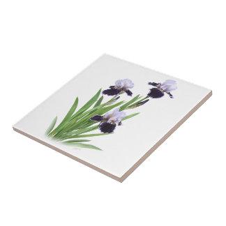 Trío del iris azulejo cuadrado pequeño