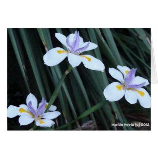 Trío del iris de la mariposa tarjeta pequeña