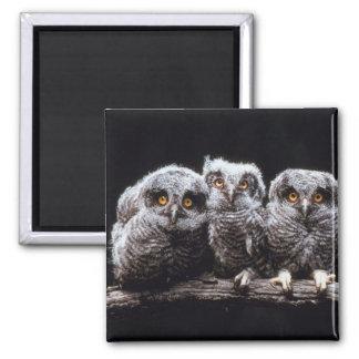 Trío del Owlet Imán Cuadrado