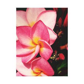 Trío hawaiano del Frangipani del Plumeria de la Impresión En Lienzo