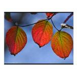 Trío iluminado colorido de las hojas de otoño postal