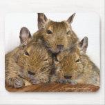 Trío Mousepad de Degu que dormita Tapetes De Raton
