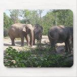 Trío Mousepad del elefante Tapetes De Ratones