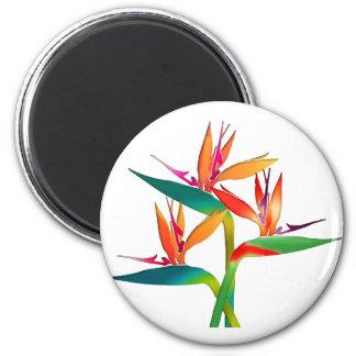 Trio of Birds of Paradise 2 Inch Round Magnet