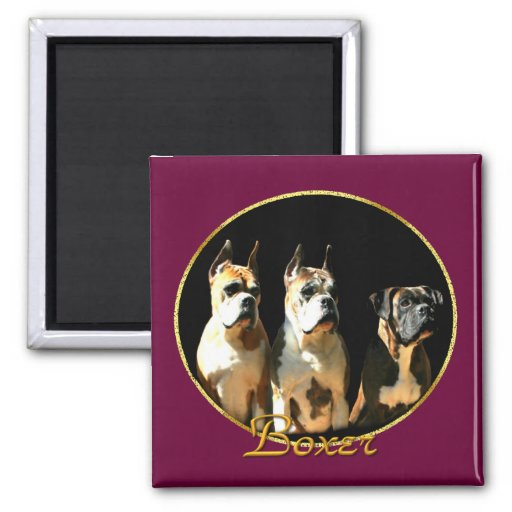 Trio of boxer dogs magnet