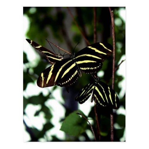 Trio of Butterflies Postcard