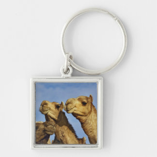 Trio of camels, camel market, Cairo, Egypt Keychain