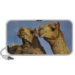 Trio of camels, camel market, Cairo, Egypt Portable Speaker