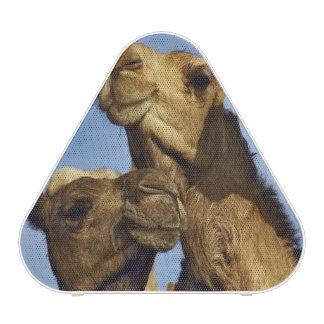 Trio of camels, camel market, Cairo, Egypt Speaker