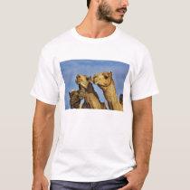 Trio of camels, camel market, Cairo, Egypt T-Shirt