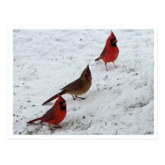 Trio of cardinals postcard