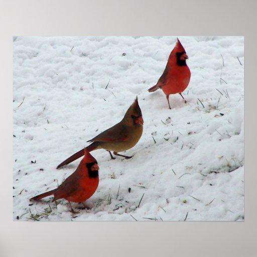 Trio of cardinals poster
