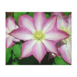 Trio of Clematis Pink and White Spring Flowers Canvas Print