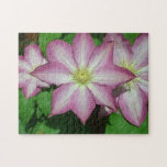 Trio of Clematis Pink and White Spring Flowers Jigsaw Puzzle