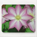 Trio of Clematis Pink and White Spring Flowers Mouse Pad