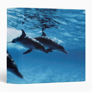 Trio of Dolphins Binder