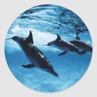 Trio of Dolphins Classic Round Sticker