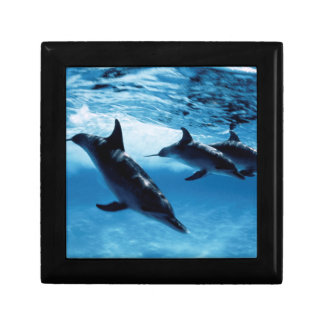 Trio of Dolphins Keepsake Box