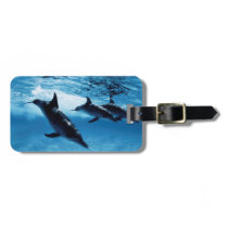 Trio of Dolphins Luggage Tag