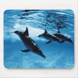 Trio of Dolphins Mouse Pad