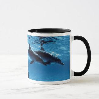 Trio of Dolphins Mug