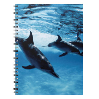 Trio of Dolphins Spiral Notebooks