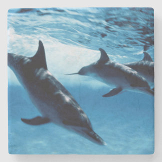 Trio of Dolphins Stone Coaster