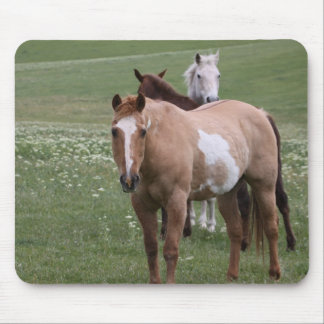 Trio of Horses in Field Mouse Pad