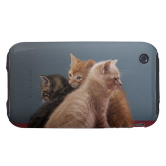 Trio of kittens iPhone 3 tough cover