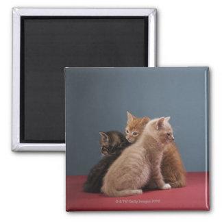 Trio of kittens fridge magnets