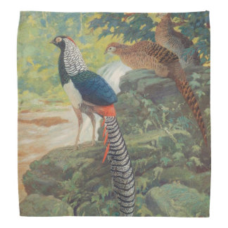 Trio of Lady Amherst's pheasant by waterfall Bandana