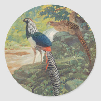 Trio of Lady Amherst's pheasant by waterfall Classic Round Sticker
