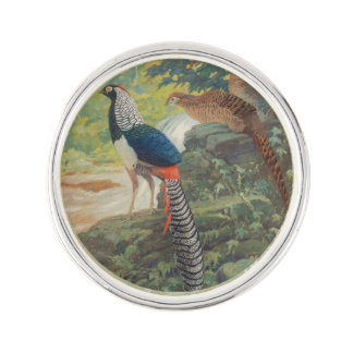 Trio of Lady Amherst's pheasant by waterfall Pin