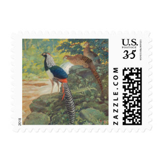 Trio of Lady Amherst's pheasant by waterfall Postage