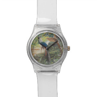 Trio of Lady Amherst's pheasant by waterfall Watches