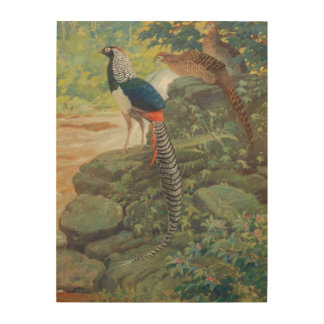 Trio of Lady Amherst's pheasant by waterfall Wood Wall Art