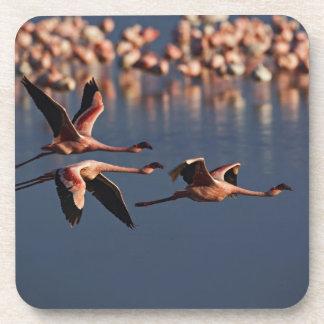 Trio of Lesser Flamingos in flight, Lake Nakuru Beverage Coaster