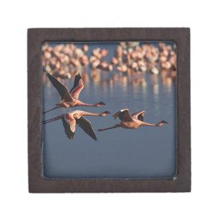 Trio of Lesser Flamingos in flight, Lake Nakuru Keepsake Box