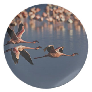 Trio of Lesser Flamingos in flight, Lake Nakuru Melamine Plate
