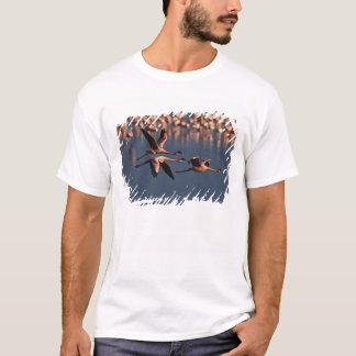 Trio of Lesser Flamingos in flight, Lake Nakuru T-Shirt