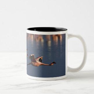 Trio of Lesser Flamingos in flight, Lake Nakuru Two-Tone Coffee Mug