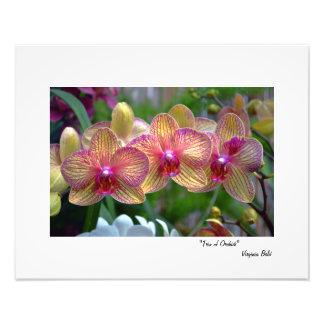 """Trio of Orchids"" Photo Print"