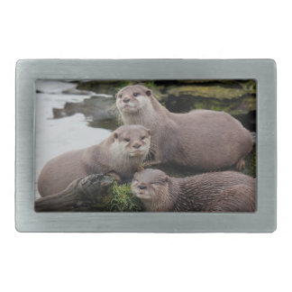 Trio of Otters Belt Buckle
