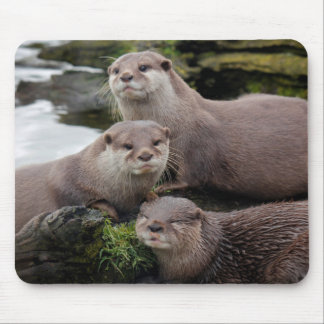 Trio of Otters Mouse Pad