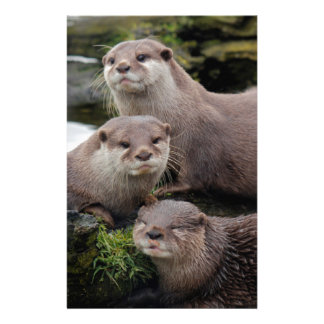 Trio of Otters Stationery