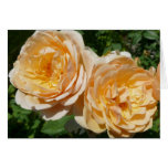 Trio of Peach Roses Pretty Floral Card